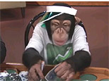 Monkey Texas Holdem