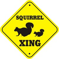 Squirrel_xing