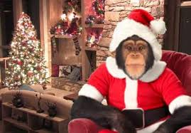 Merry Christmas monkey
